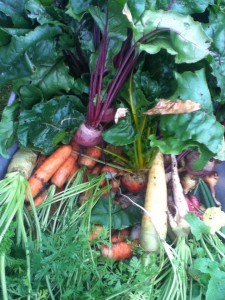 Dumfries Garden Veg sale! (30/09/14)